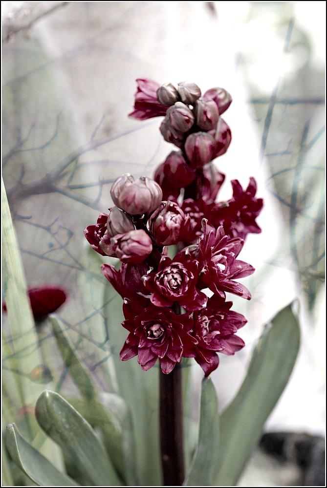 flower_art #46